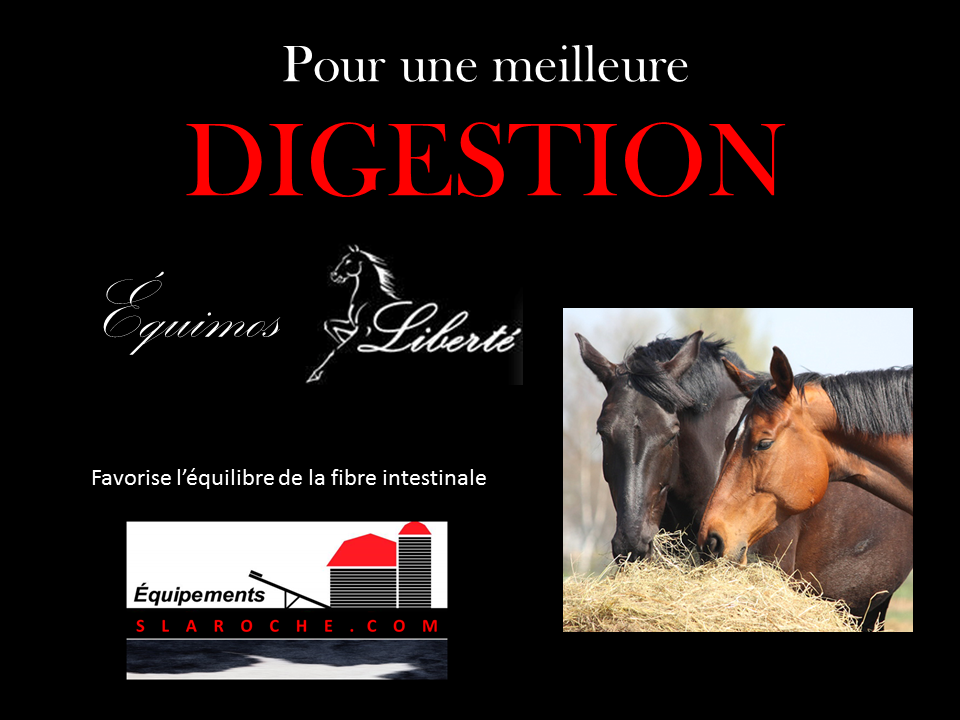 nutrition_alimentation-cheval_digestion-cheval